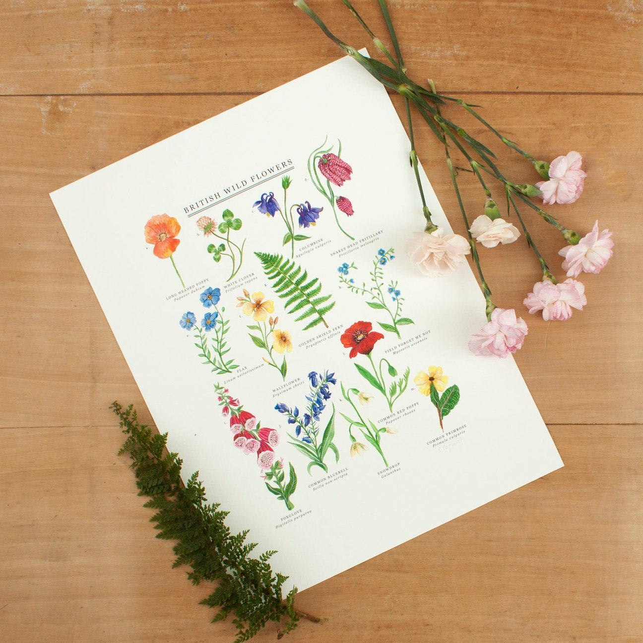 Nature Inspired Giclee Prints - Various Designs