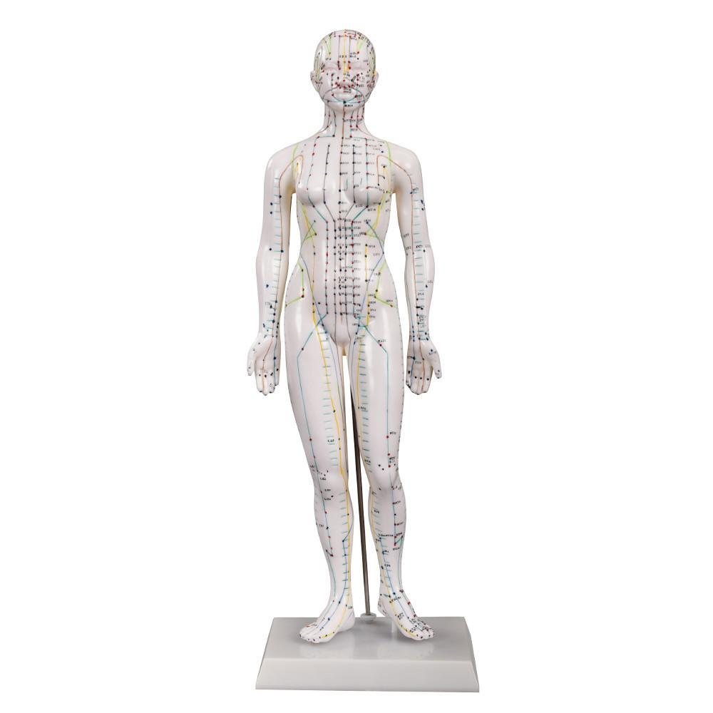 Female Acupuncture Model front