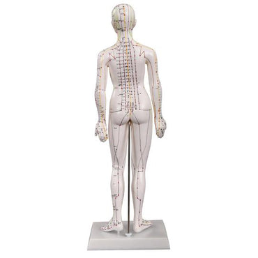 Back of female acupuncture model