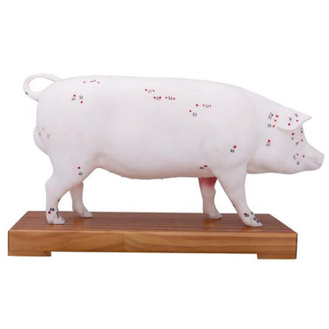 Pig Acupuncture Points