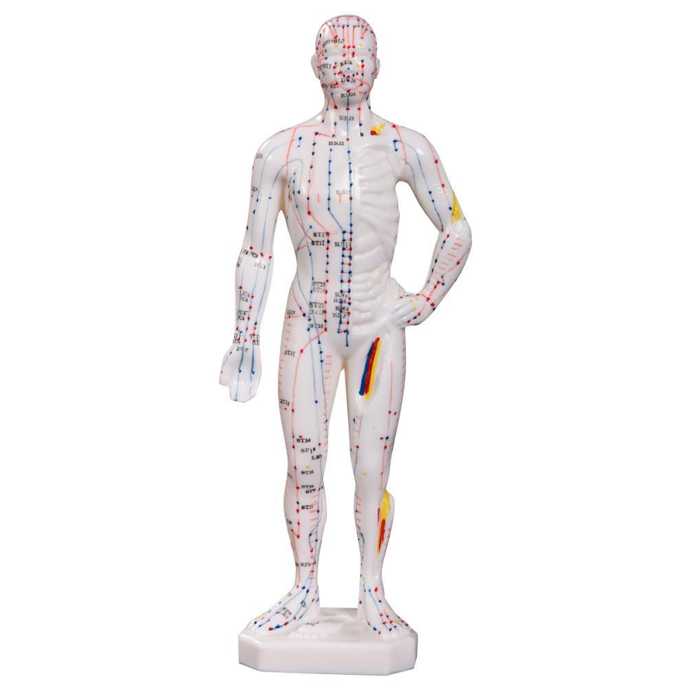 Acupuncture male model front