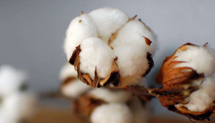 [1] Why we still use cotton