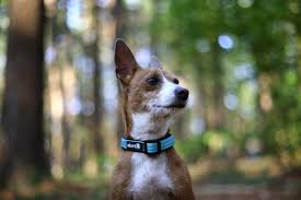Leashes, Collars & Harnesses