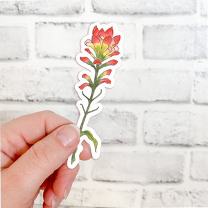 Sticker - Flowers - Indian Paintbrush
