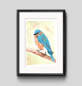 Art Print - Eastern Bluebird