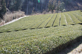 Organic Green Tea Farm