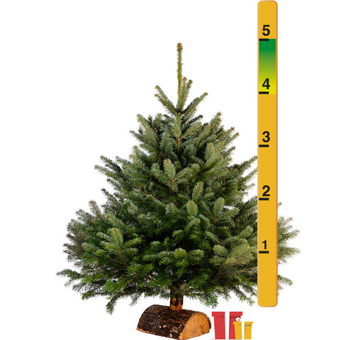 4-5 Ft Nordmann Fir Christmas Tree - Non Needle Drop