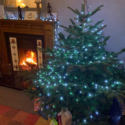 5-6 Ft Nordmann Fir Christmas Tree