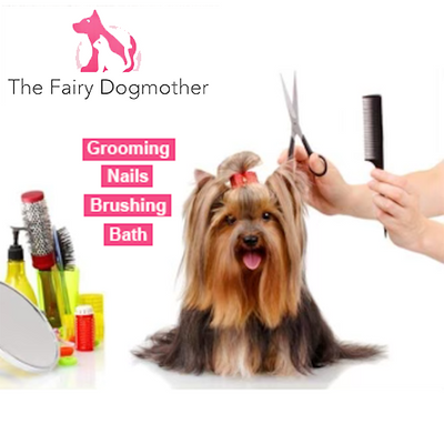 Grooming Frequency For Dog Owners