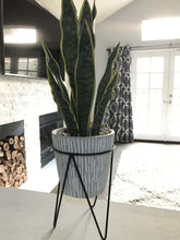 Load image into Gallery viewer, Snake Plant in Needle Cement on Metal Stand