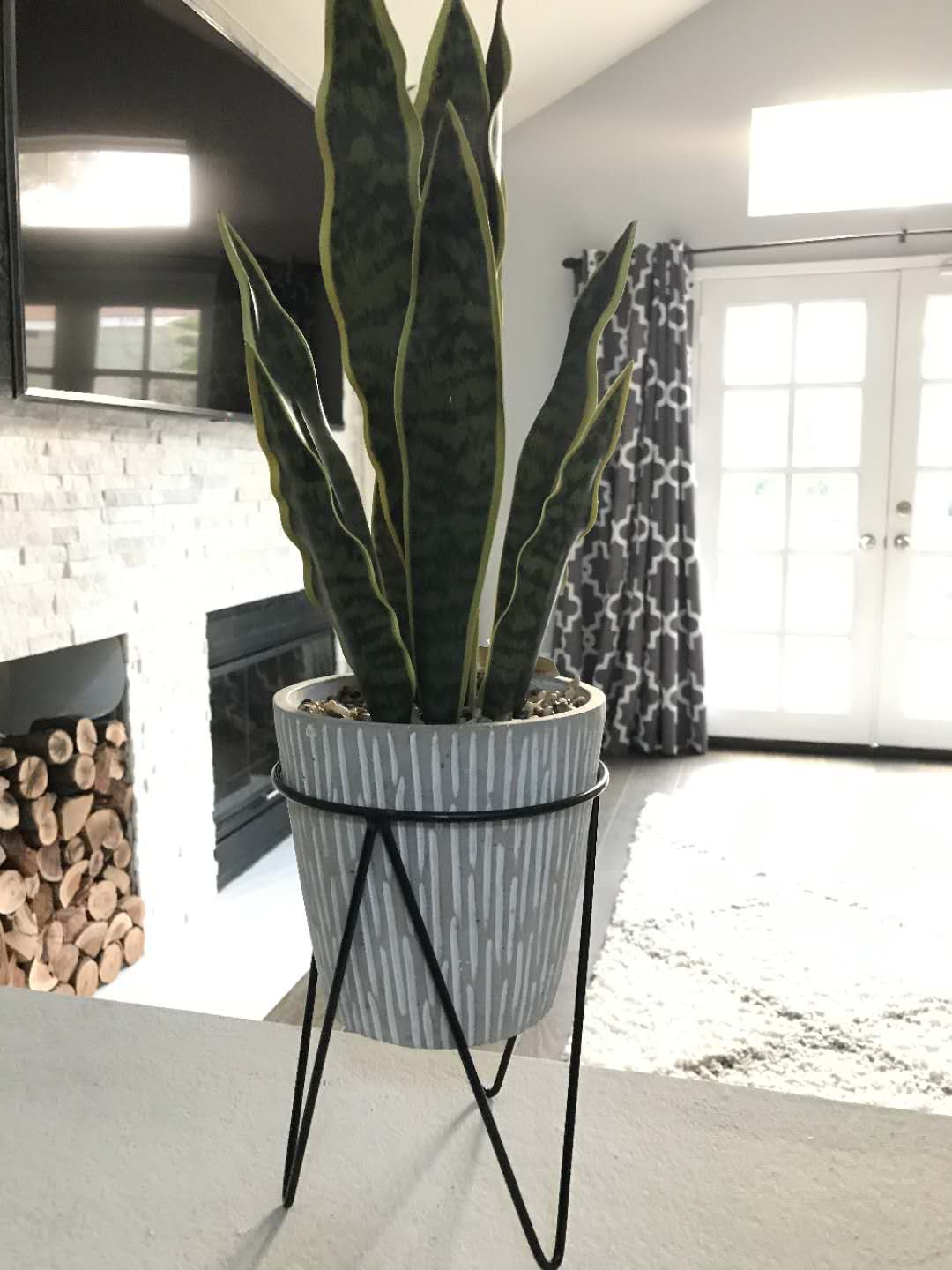 Snake Plant in Needle Cement on Metal Stand