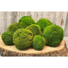 Load image into Gallery viewer, 5'' Medium Moss Ball