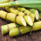 Booth - Fresh Sugarcane Juicing