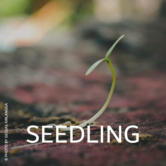 Seedling Project