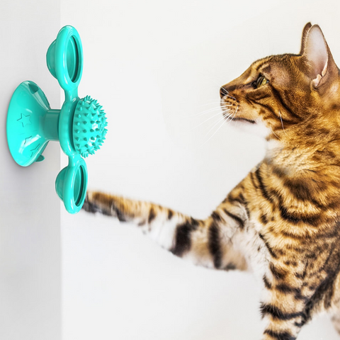 ProActive Cat Toy On Wall