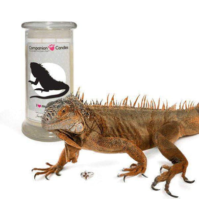 I Love My Iguana! - Companion Candles-Companion Candles-The Official Website of Jewelry Candles - Find Jewelry In Candles!