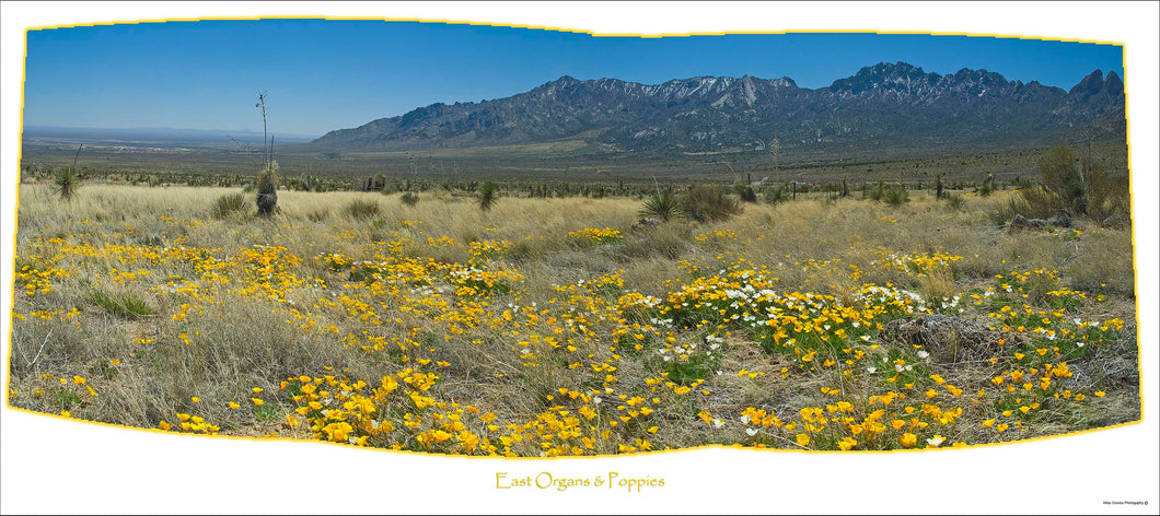 EAST ORGANS & POPPIES - East side of the Organ Mountains 16x36