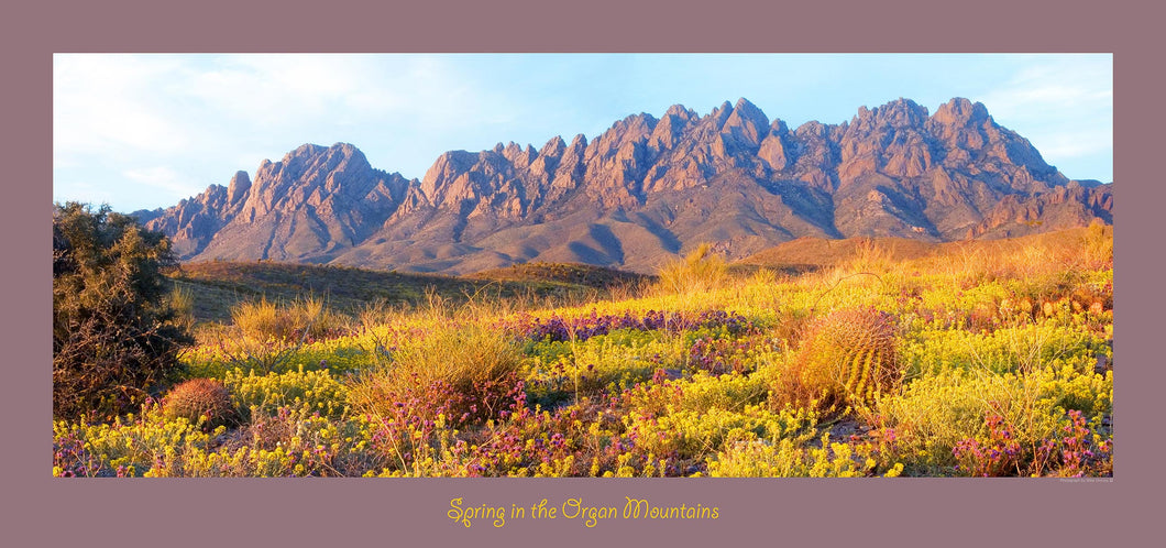 SPRING IN THE ORGAN MOUNTAINS - Panoramic poster 16x36