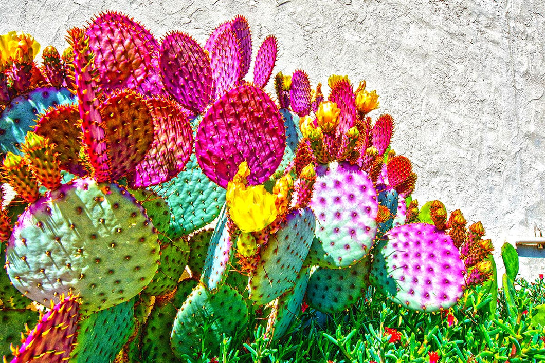 E50504-89 Prickly Pear & Blooms