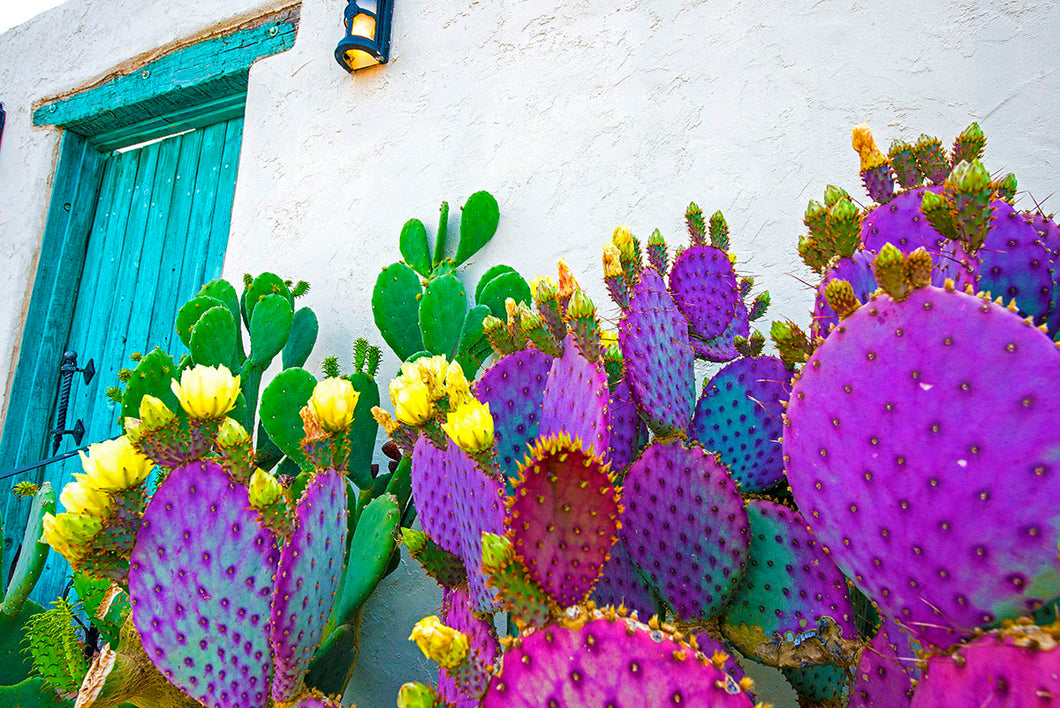 E80501-20 Horizontal Blooming Prickly Pear Cactus and Turquoise Door