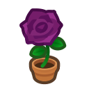 Purple-rose Plant