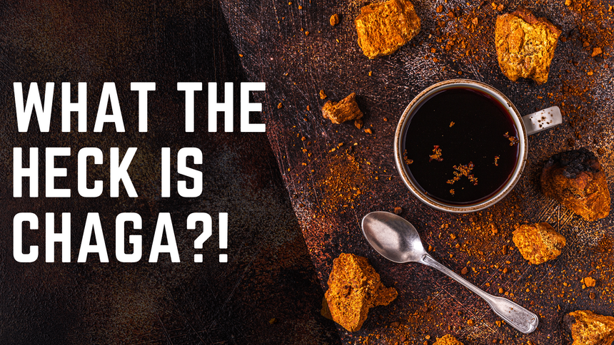 What the heck is Chaga?