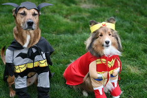 10 Halloween Safety Tips for Pets!