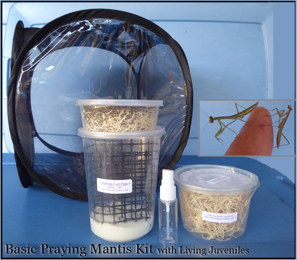 Praying Mantis Kit - Basic