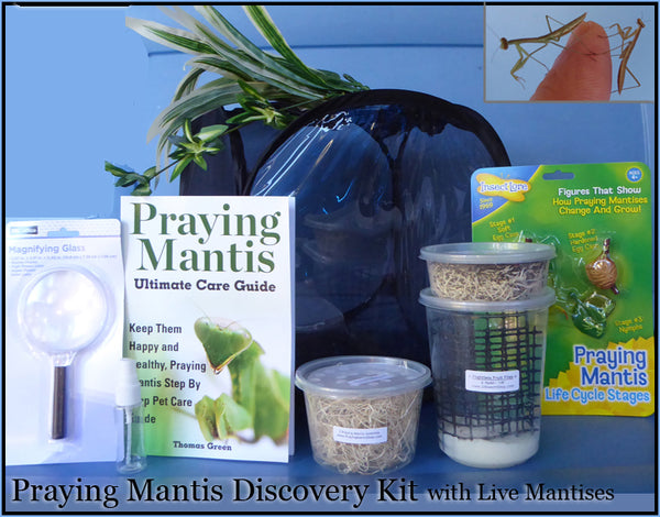 Praying Mantis Kit - Discovery