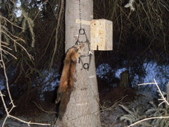 DO YOU LIKE TRAPPING?  Plans for Tree boxes for trapping Martin & Fisher