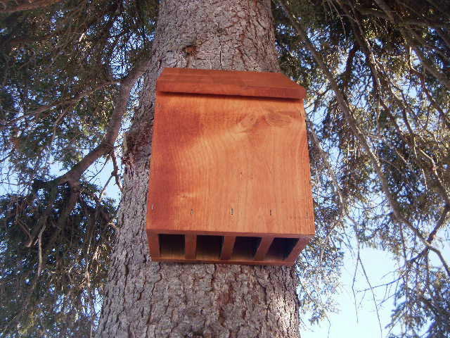 The Great Alaskan Bat House Plans My Alaskan Creations