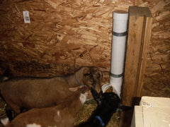 Mineral Feeder For Goats Small Farm Animals - FREE PLANS - GREAT IDEA