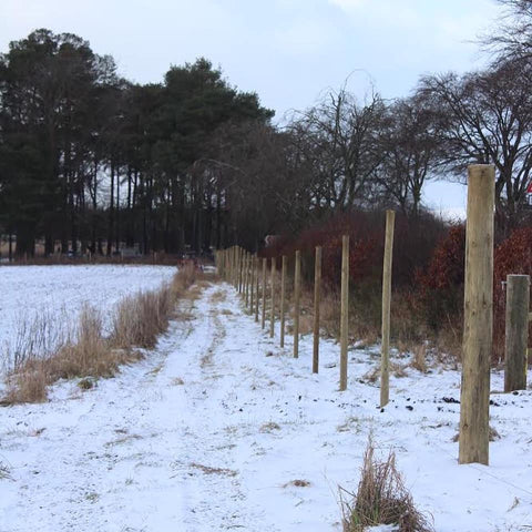 Row of fence posts for rewilding hedgerow