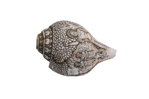 Carved Sankha (Conch Shell)
