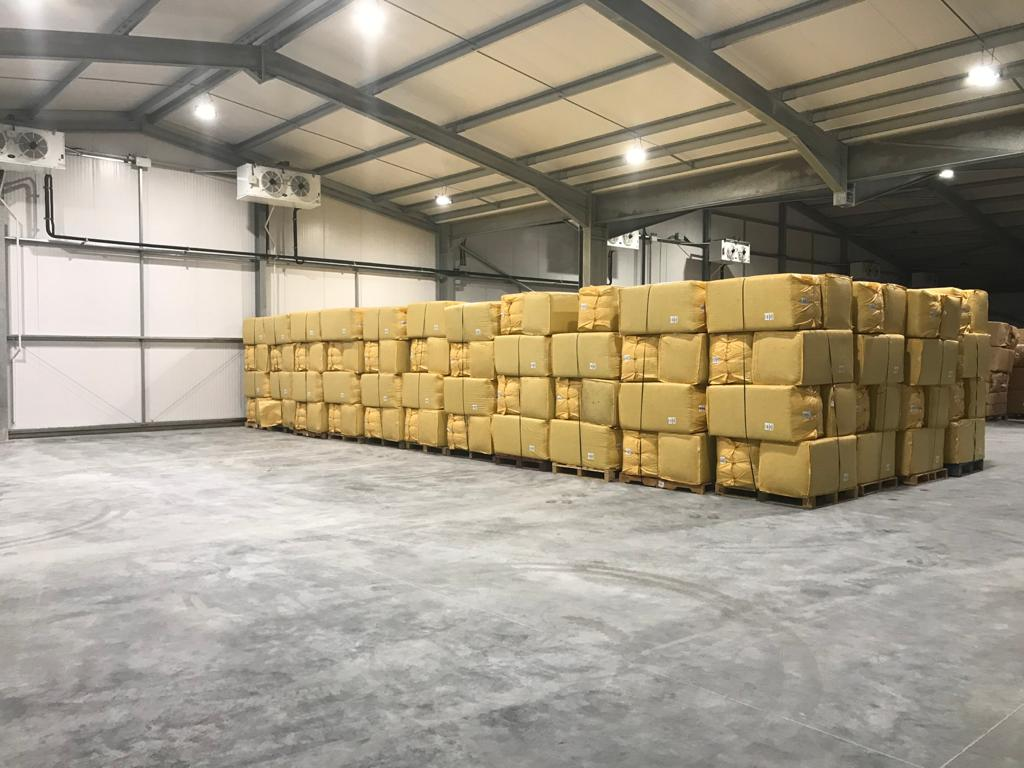 English Hops in Cold Storage