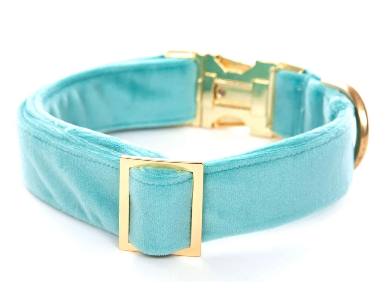Robin's Egg Velvet Dog Collar