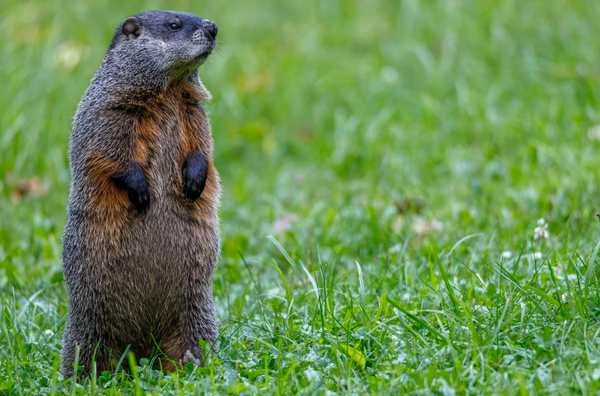Groundhog's Day is Every Day