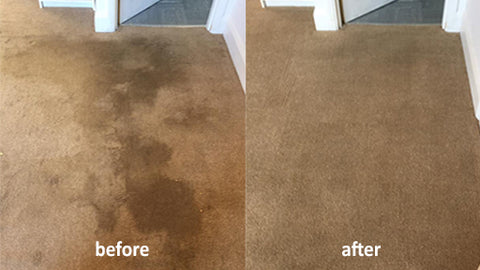 Showcase Carpet Cleaning in Medway