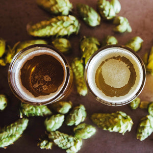 Hops, I did it again | IPA+Hoppy Discovery Kit 12 Pack