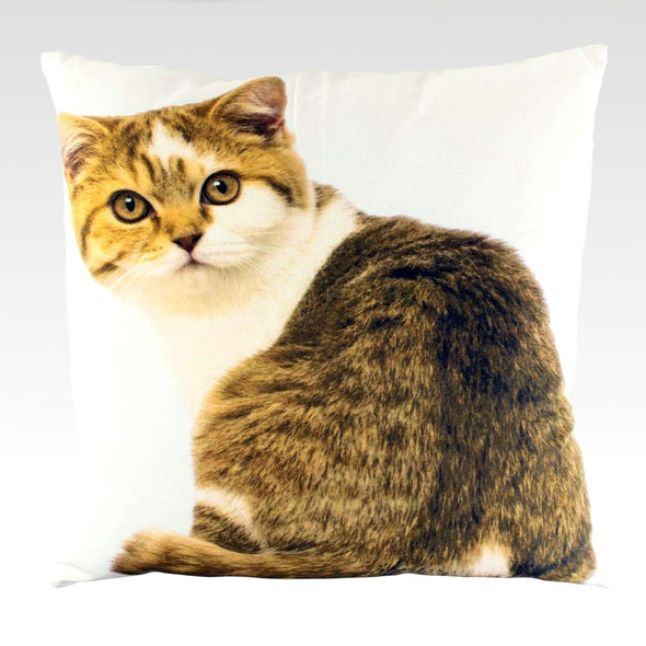 Curious Tabby -Canvas Cushion