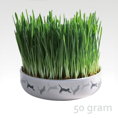 Ceramic Bowl with Grass-seeds