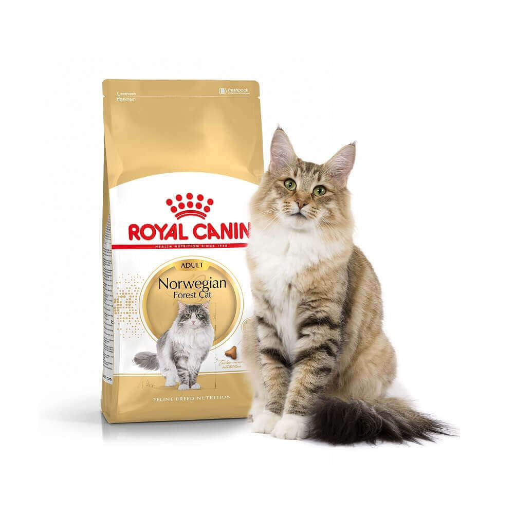 Royal Canin Breed Norwegian pour Chat Adulte -10kg