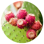 prickly-pear-extract