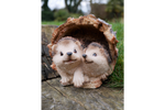 Hedgehogs In Log