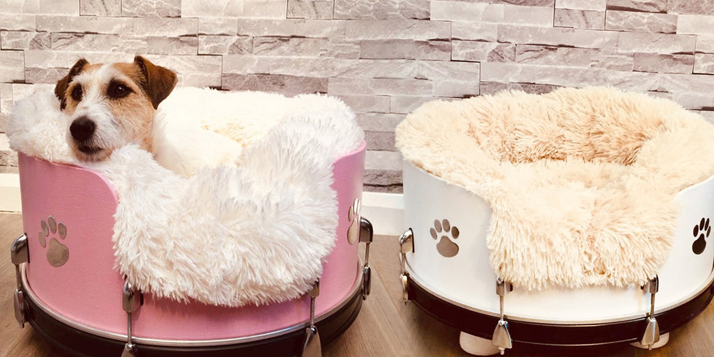 Upcycled comfort for cats and canines, with Little Knights pet-friendly paint