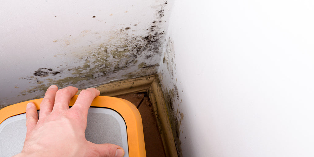How black mould affects your health