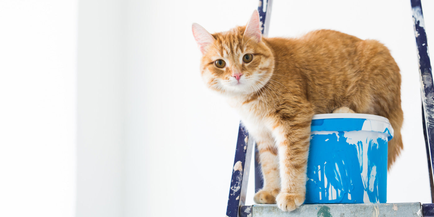 Problems with paint that smells of cat pee? We can fix it