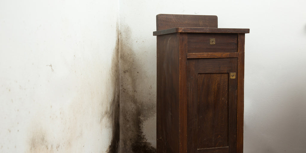 How to get rid of and prevent black mould on walls