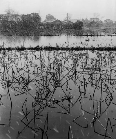 Werner Bischof - Lotus plants in winter, Kyoto, Japan,1951
