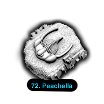 No.072 Peachella